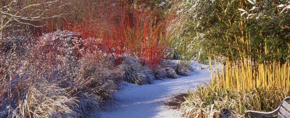 Co je zapotřebí udělat se zahradou dokud nesněží 1
