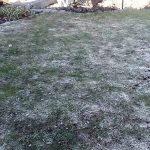 Trávník v zimě 4