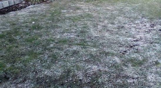 Trávník v zimě 3