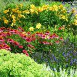 Okrasné rostliny v zahradě 5