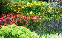 Okrasné rostliny v zahradě 24