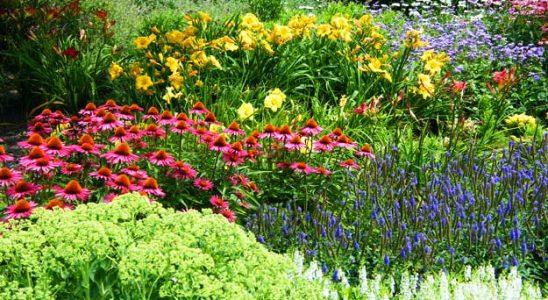Okrasné rostliny v zahradě 4