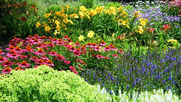 Okrasné rostliny v zahradě 1