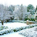 Záhony v zimě 2