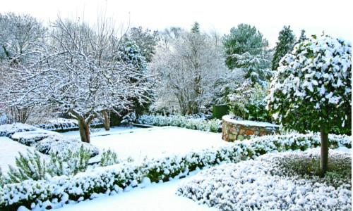 Záhony v zimě 19